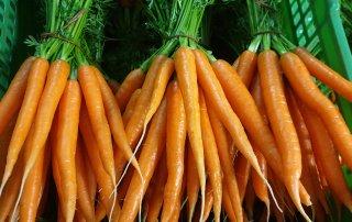 Haap's Karotten