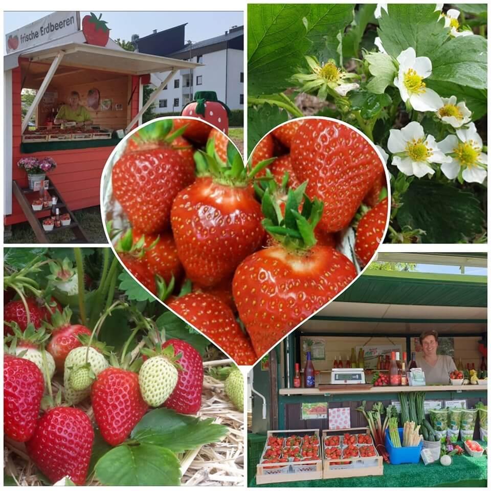 täglich frische Erdbeeren, Hofladen Haap, Erdbeerstände in Rommelshausen und Stetten