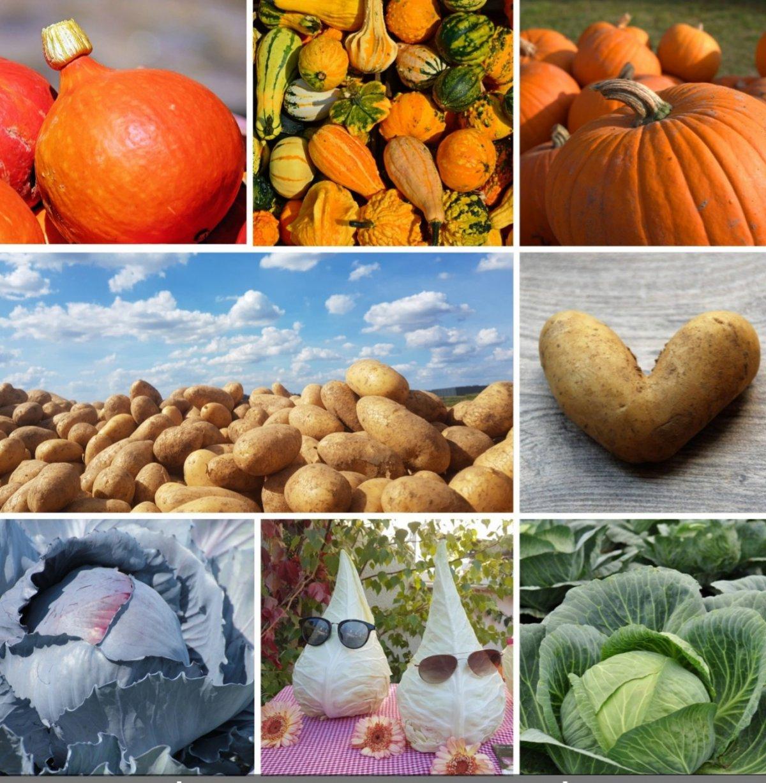 Kartoffel, Zier- und Speisekürbisse und verschiedene Sorten Kohl aus eigenem Anbau