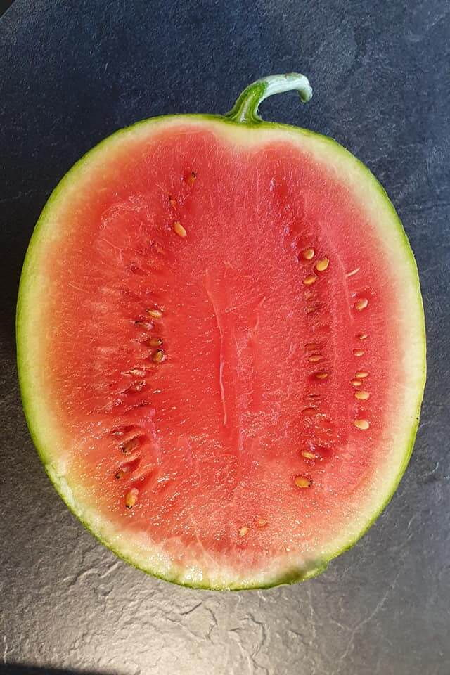 Miniwassermelonen aus eigenem Anbau