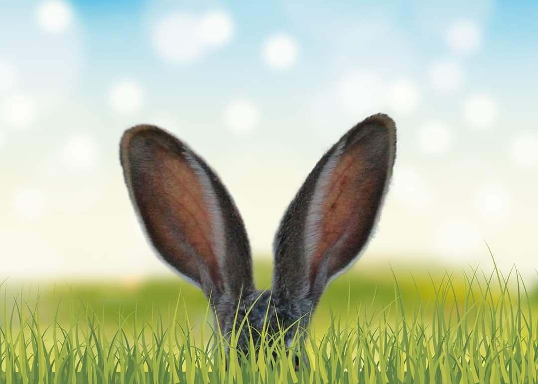 Hofladen Öffnungszeiten über Ostern