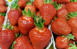 Haap's Erdbeeren
