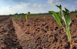 Bauern und Gemüsehof Haap, Jungpflanzen