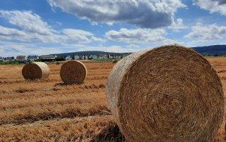 Strohballen Bauern- und Gemüsehof Haap