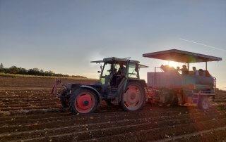 Bauern und Gemüsehof Haap, Kartoffel Ernte